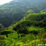 terrazas-arroz-vietnam