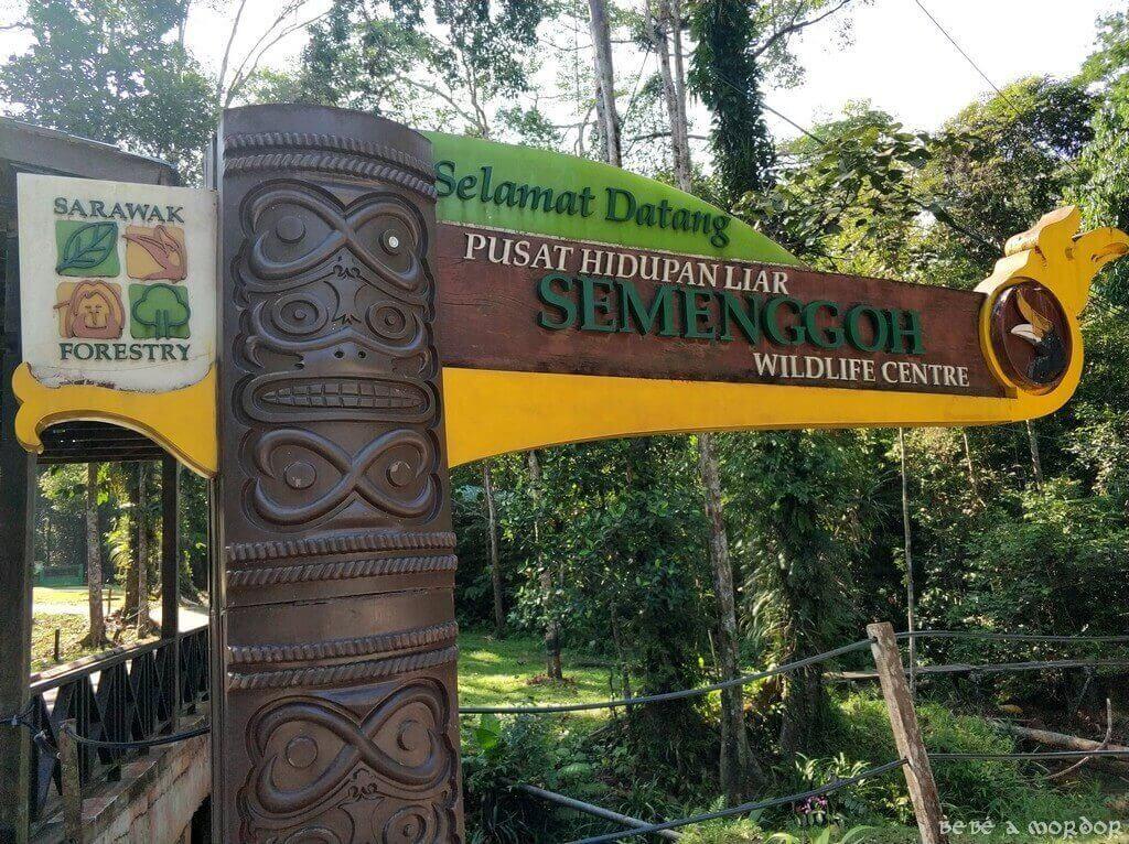 18. Kota Kinabalu - ver orangutanes en Semmengoh Wildlife o no