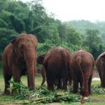 visita elefantes en Elephant Nature Park con niños en Tailandia