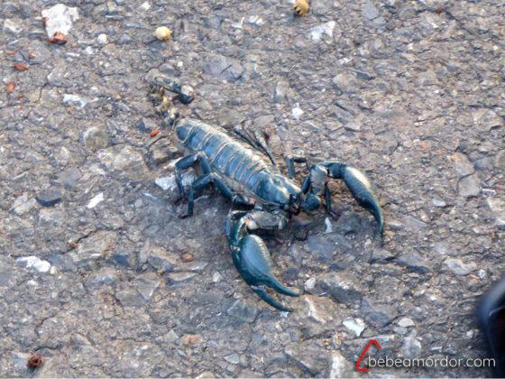 escorpión en parque nacional Khao Yai