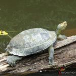 tortuga y otros animales en Khao Yai