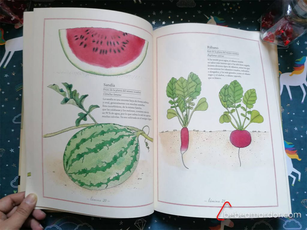 libro sobre frutas y verduras